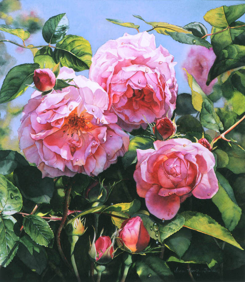 'Constance Spry' - Floral Painting - Watercolor on Arches 300gsm hot pressed paper 20″ x 17 1/2″ 510 mm x 440 mm