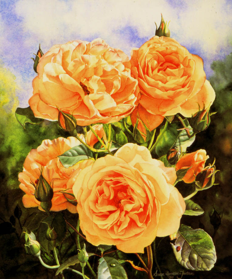 'Graham Thomas' - Floral Painting - Watercolor on Arches 300gsm hot pressed paper 17 1/2″ x 14 3/4″ 445 mm x 375 mm