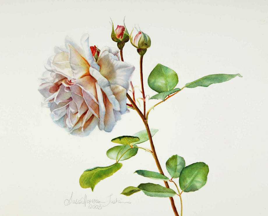 'Innocence' - Floral Painting - Watercolor on Arches 300gsm hot pressed paper 11″ x 10 1/2″ 288 mm x 268 mm
