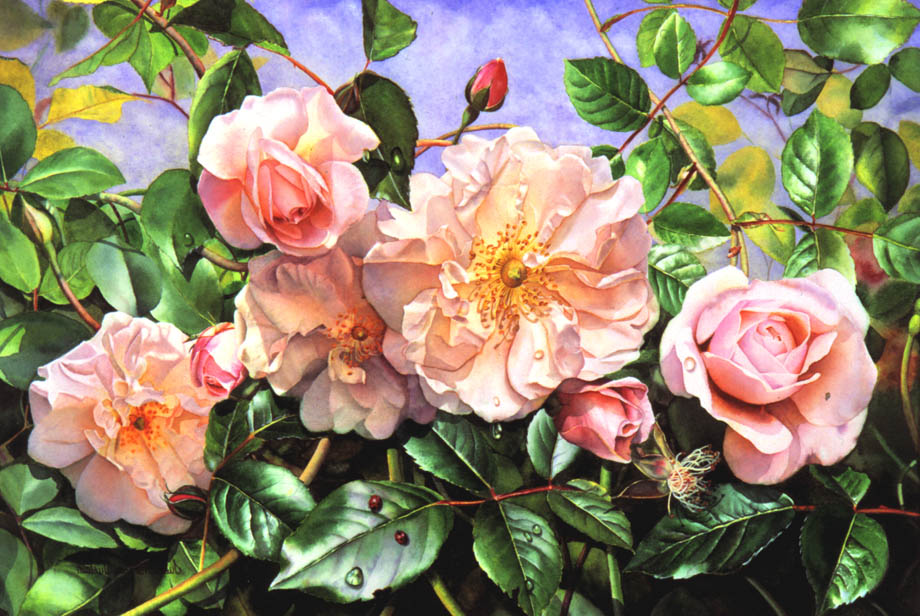 'Old Rambling Rose' - Floral Painting - Watercolor on Arches 300gsm hot pressed paper 14″ x 20″ 360 mm x 510 mm