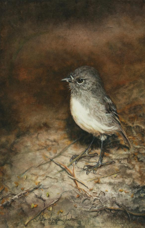 'Stewart Island Robin' - Bird Paintings - Watercolor on Arches  300 gsm Hot Pressed paper 12″ x 7 1/2″  300 mm x 190 mm