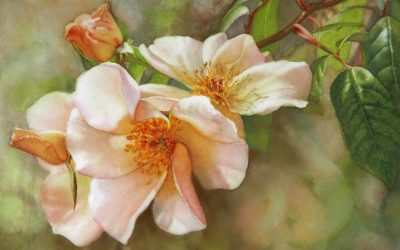 FINAL STAGE OF HOW TO #PAINT IN WATERCOLOR; SALLY HOLMES ROSE STUDY