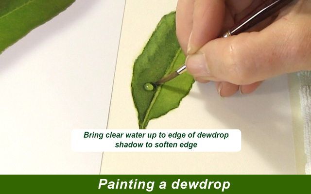 "DVD: Watercolor Masterclass Volume One: ""Painting Life Like Leaves and Vibrant Greens""   for all skill levels"