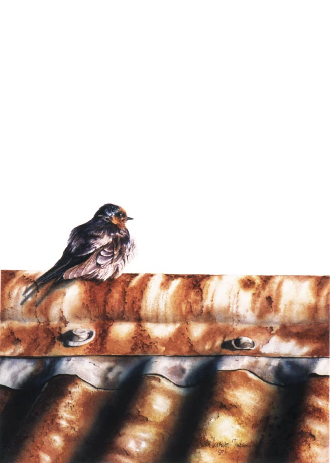 'A Warm Welcome' - Bird Paintings - Watercolor on Arches 300gsm hot pressed paper 12″ x 8 3/4″ 305 mm x 220 mm