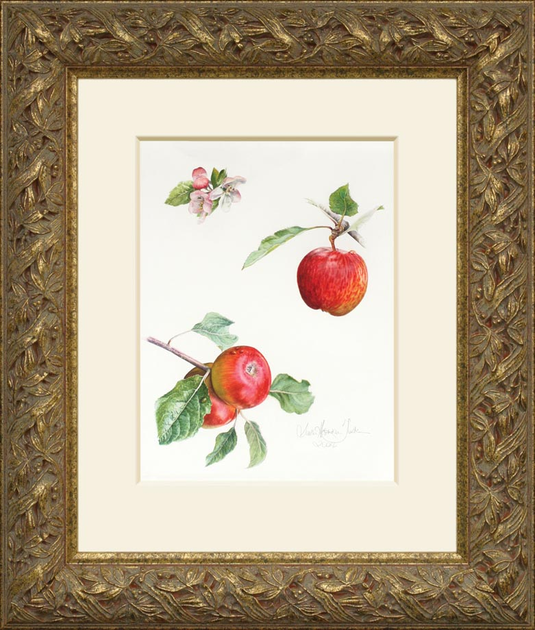 Apple a day framed - Watercolor on Arches 300 gsm hot pressed paper 15 1/4″ x 11 1/2″ 388 mm x 290 mm
