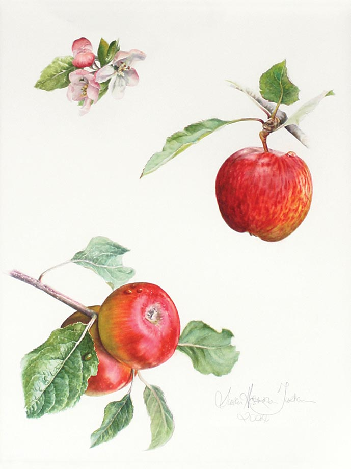 Apple a day - Watercolor on Arches 300 gsm hot pressed paper 15 1/4″ x 11 1/2″ 388 mm x 290 mm