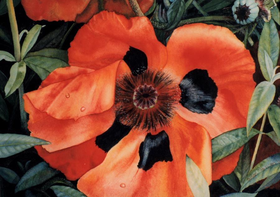 'Papaver' - Floral Painting