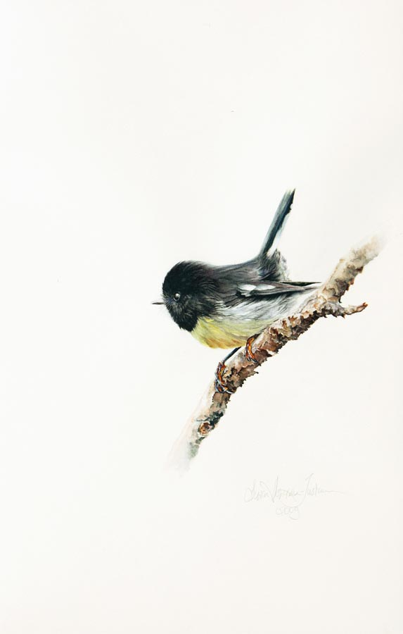 'South Island Tomtit' - Bird Paintings - Watercolor on Arches 300 gsm Hot Pressed paper Size: 16″ x 10″ 410 mm x 255 mm