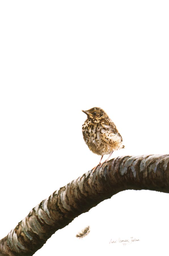 'Waiting For Mum' - Bird Paintings - Watercolor on Arches 300gsm hot pressed paper 14″ x 9 3/4″ 355 mm x 250 mm