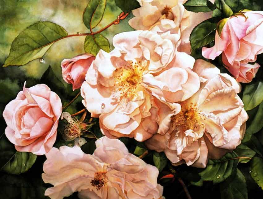 Rose Adèlaide-d'Orleans